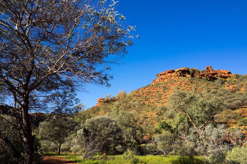 Australia Australia & Travel Australian Landscape Kings Canyon Kings Canyon National Park Lizard Milky Way Watarrka Watarrka National Park