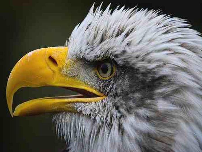 Eye Em Best Shots Eye Em Birds Eye Em Best Edits