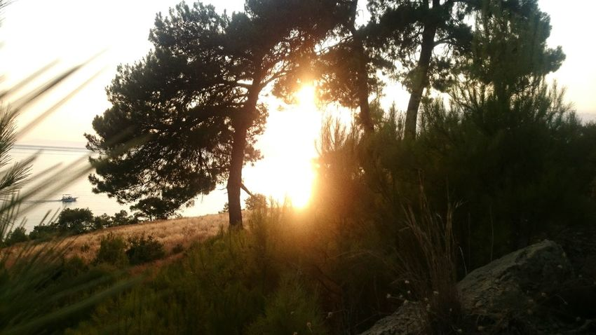 My Year My View Tree Nature Sunset Beauty In Nature No People Sun Moment In Time Naturelife Forest Seaside_collection Natural Photography