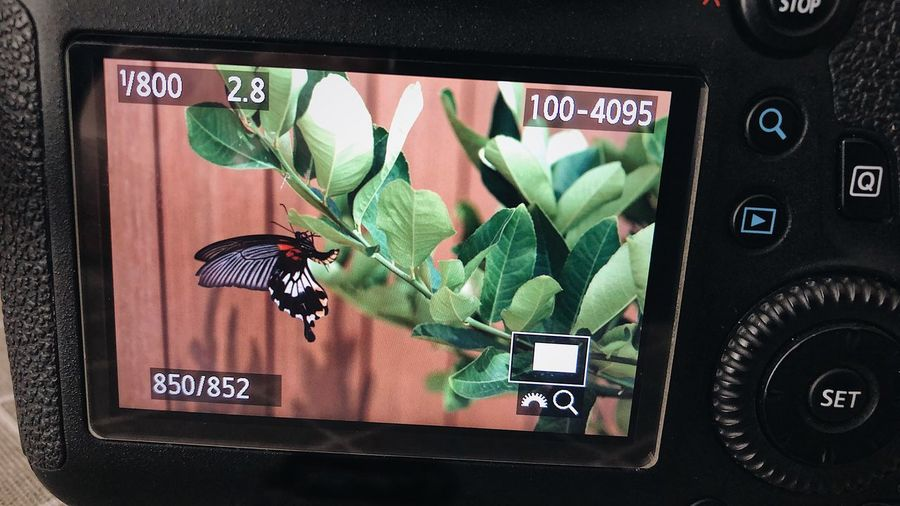Green Color Communication Leaf Indoors  No People Day Close-up Technology Wireless Technology Butterfly Tree Camera - Photographic Equipment Camera Screen DSLR Lcd Monitor Camera Work Preview Business Stories