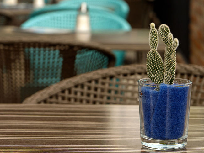 Waiting of Customer Cacti Closed Focus On Foreground Forgotten Geschlossen No People OffTime Restaurant Restaurant Decor Waiting For Customers
