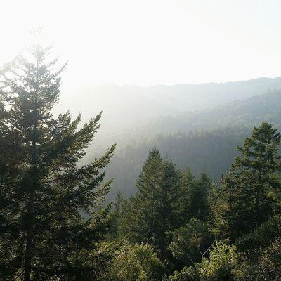 Fresh air does a body good. Vscocam Vscogrid Mounttamalpais Mounttam california hiking visitmarin marin