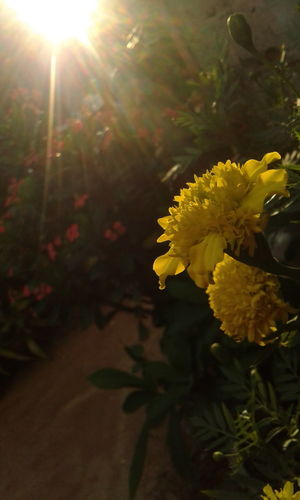 Naturaleza sin filtros... Sin Filtros Flower Fragility Nature Freshness Plant Beauty In Nature Yellow