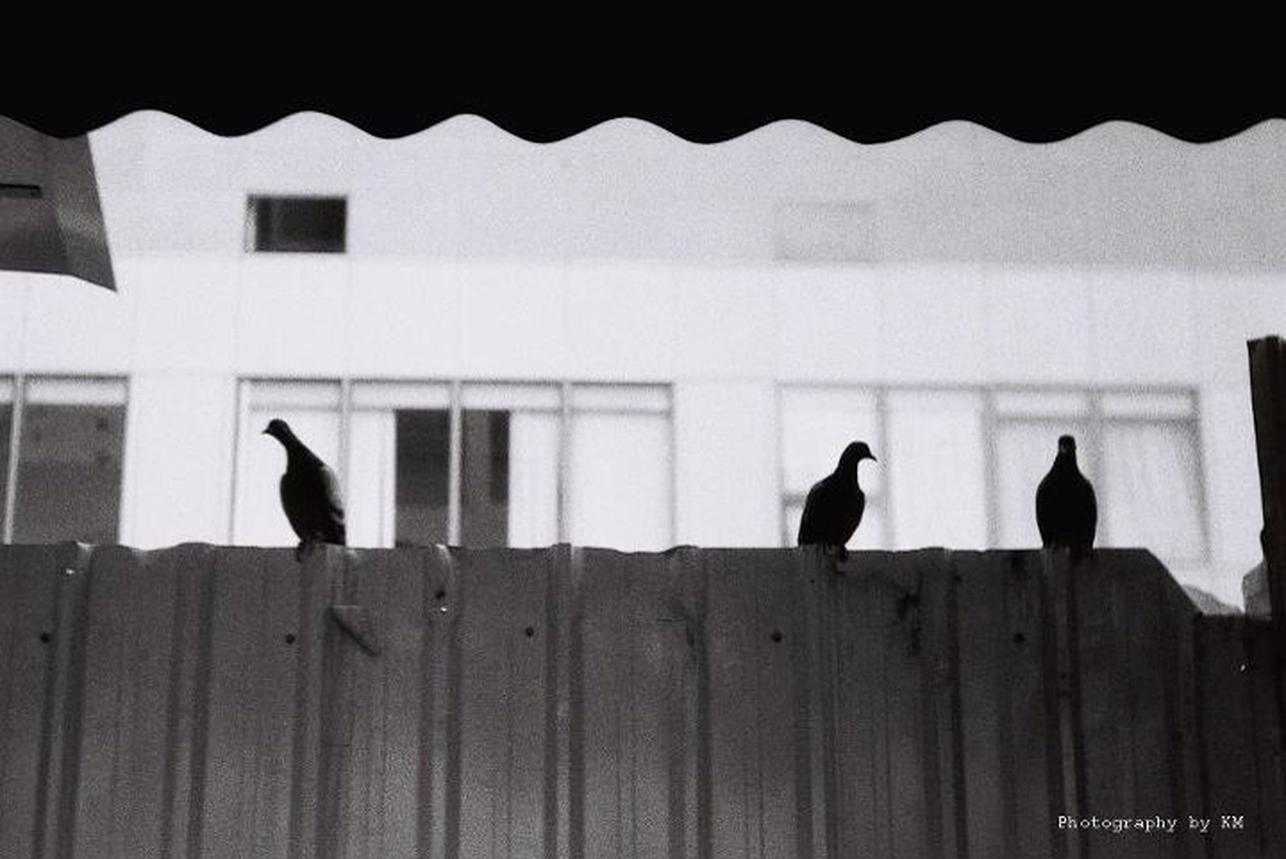 animal themes, bird, animals in the wild, perching, wildlife, one animal, built structure, pigeon, architecture, silhouette, two animals, building exterior, window, railing, full length, outdoors, day, reflection, no people