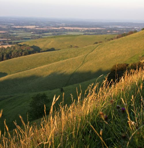 South Downs Agriculture Beauty In Nature Day Field Grass Green Color Growth Hill Landscape Nature No People Outdoors Rural Scene Scenics Sky Summer Sunset Tranquil Scene