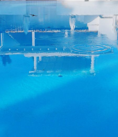 """Flying and drinking"" Water Blue Reflection No People Beauty In Nature Tranquility Day Swimming Pool Scenics Outdoors Swimming Puglia Puglia South Italy Italy🇮🇹 Italia"