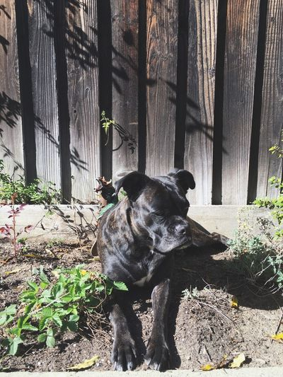 Sun bath With My Dog
