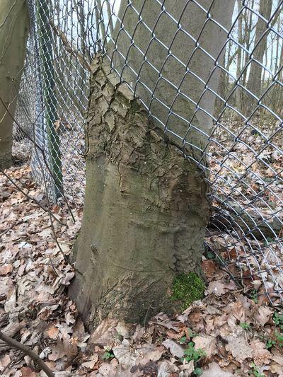 Streaky tree 01