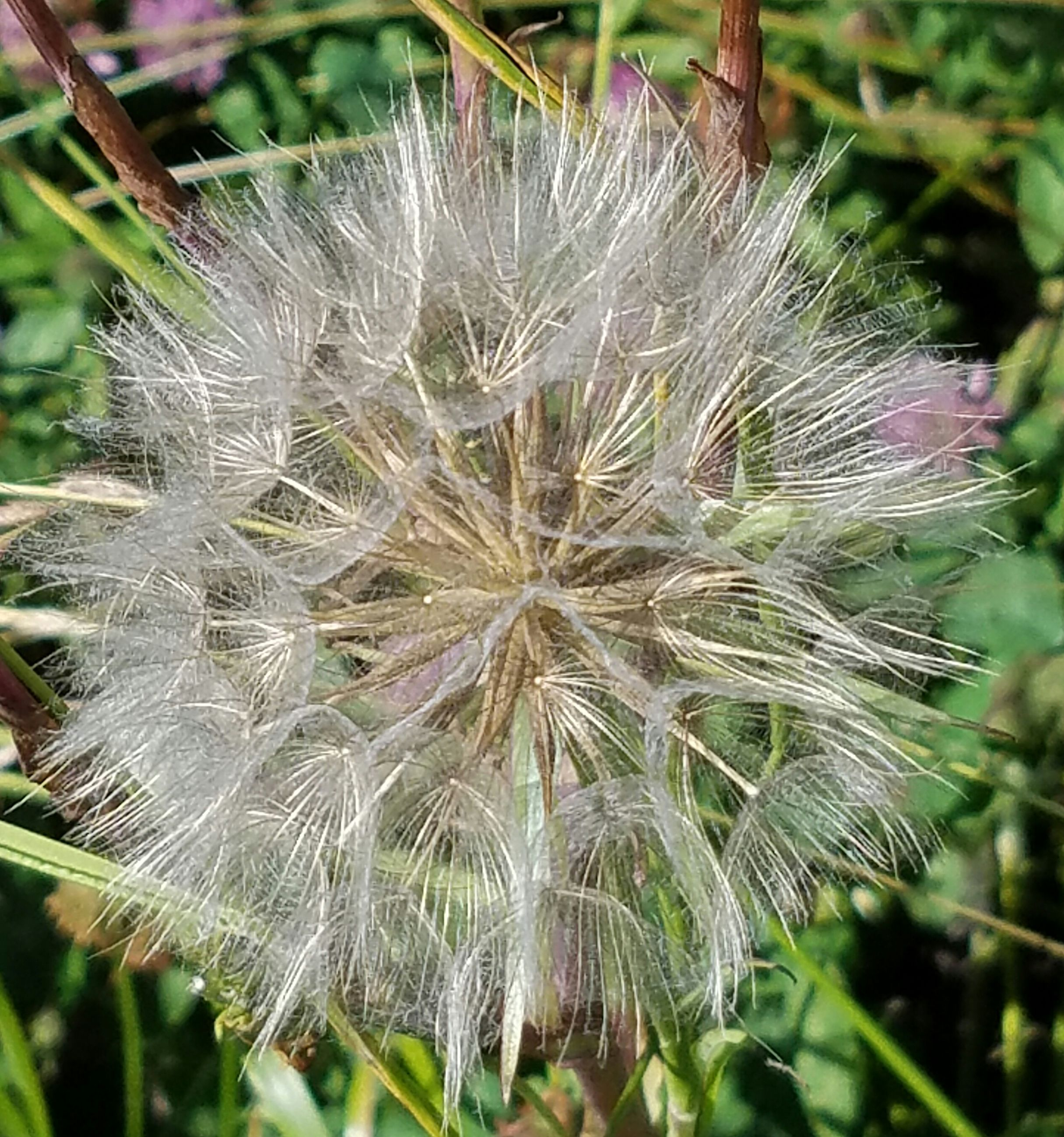 flower, fragility, close-up, growth, freshness, focus on foreground, dandelion, beauty in nature, nature, flower head, plant, day, dandelion seed, outdoors, softness, selective focus, in bloom, blooming, natural pattern, no people, botany, uncultivated, stem, petal, blossom, tranquility