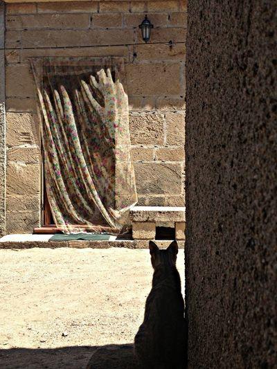 the guardian Sardegna Cat