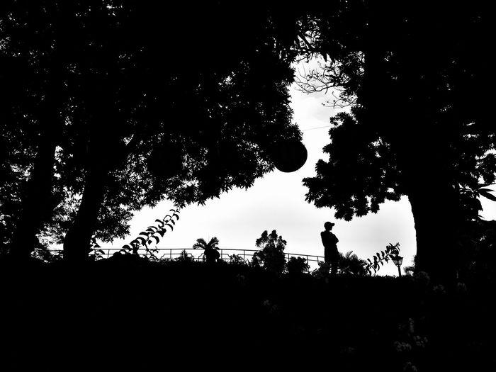 Silhouette Low Angle View EyeemPhilippines Blackandwhite Mobilephotography Blackandwhite Photography Asuszenfoneselfie Streetphotography Builtforphotography EyeEmNewHere Eyeem Philippines Bnw_globe Bnw_captures Bnwphotography Www_streetshots Www_streetphotography