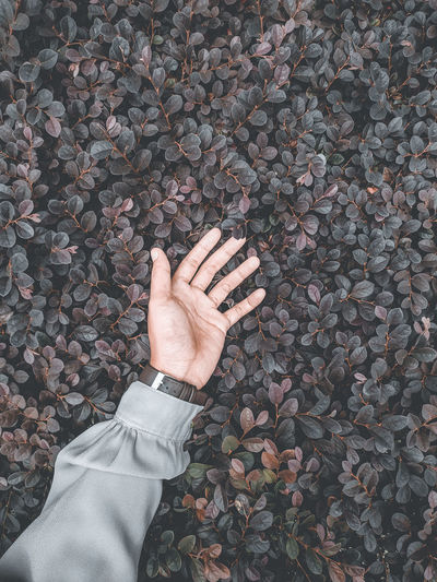 High angle view of human hand touching stone