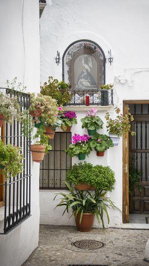 Architecture Barrio De La Villa Building Exterior Flower Nature Plant Priego De Cordoba Window Box
