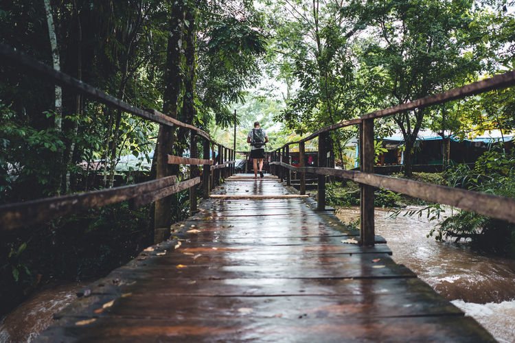 Tree Plant Direction The Way Forward Forest Nature Day Footpath Footbridge Bridge Real People Water Growth Connection Architecture Railing Diminishing Perspective Wet Land Built Structure Outdoors Rain Bridge - Man Made Structure Rainy Season WoodLand