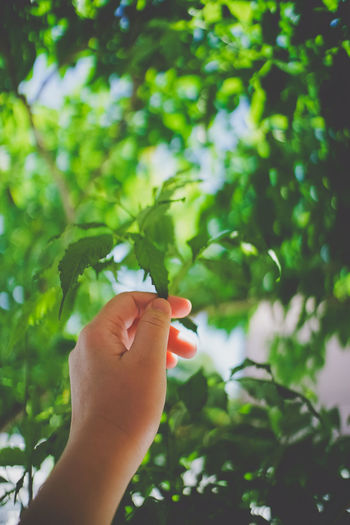 Green in life. Body Part Care Day Finger Focus On Foreground Green Color Growth Hand Holding Human Body Part Human Finger Human Hand Human Limb Leaf Nature One Person Outdoors Personal Perspective Plant Plant Part Real People Tree The Still Life Photographer - 2018 EyeEm Awards The Great Outdoors - 2018 EyeEm Awards