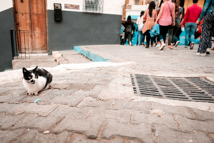 Cat on footpath by street in city