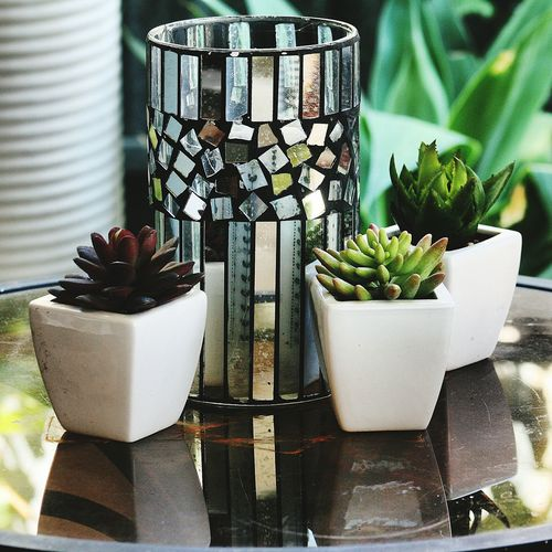 Reflections Cactus Mirror Glass Plants Vase
