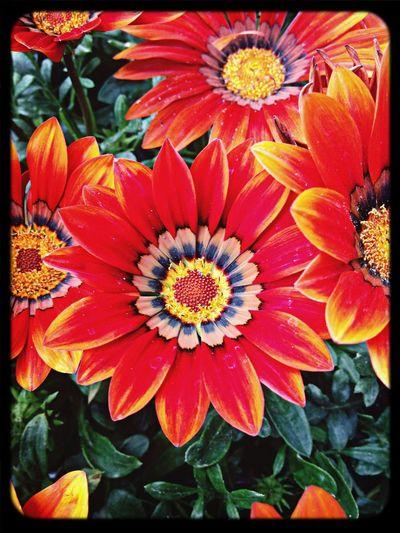 Flowers,Plants & Garden Macroclique Enjoying Nature