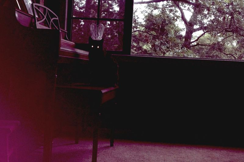 Kitty Them Eyes Piano Dark
