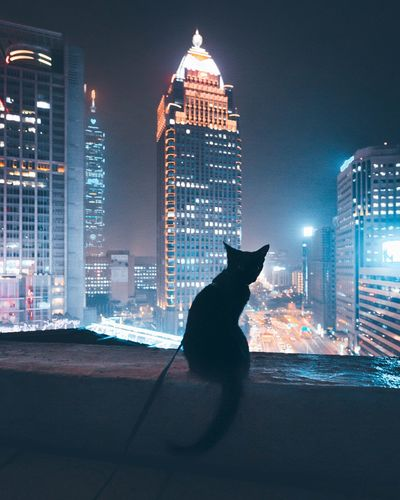 Pets Domestic Cat Night Architecture Building Exterior Domestic Animals Mammal One Animal City Animal Themes Built Structure Skyscraper Illuminated Feline Cityscape Outdoors Portrait Sky No People Urban Skyline Cat