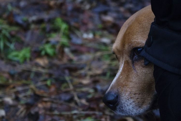 // Peeking.Dog 🐕🐾 Outdoors Animal Themes Day Nature Close-up Shot On Canon Canon700D Fog Foggy Foggy Morning Dog Dogs Of EyeEm Dogs Beaglelovers Beagle Beagles  Canon Photography EyeEmNewHere Dogslife Puppy Beagles  Dogsofeyeem Dogoftheday Cute Dog  Cute Pets