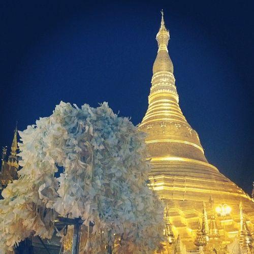 Shwedagon Pagoda Yangon Myanmar igersmyanmar