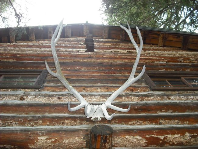 Antlers Antlers On Wall Hunting Lodge Old Wood Building Log Cabin Exter Log Cabin Old Cabin Cabin In The Woods Abandoned Places Abandoned Buildings If These Walls Could Talk Historical Building Looking Up In The Woods Cabin Life Quiet Places Lost Places Back In Time Back In The Old Days Back In The Day Buffalo Bill Wyoming Adventure Wyoming Built To Last Built By Hand