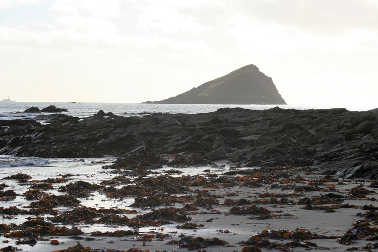 Great Mewstone seen from Wembury, Devon Coastline Devon Great Mewstone Landscape Landscapes With WhiteWall Rock Formation Sea Seaweed At The Beach