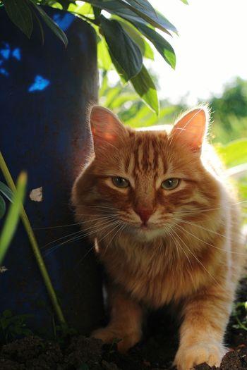 Cat Catoftheday Cats Sunny Holydays Animals Hi! Nofilter