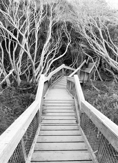 coppins lookout sorrento Australia Trip down The Memories lane the way forward Tree Footbridge bridge - man made structure boardwalk Hand Rail Spiral stairs Stairs diminishing perspective Calm Growing empty road vanishing point Coppins Lookout Sorrento Australia Trip Down The Memories Lane The Way Forward Tree Footbridge Bridge - Man Made Structure Boardwalk Hand Rail Spiral Stairs Stairs Diminishing Perspective Calm Growing Empty Road