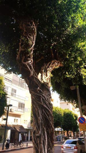 Tree New Life