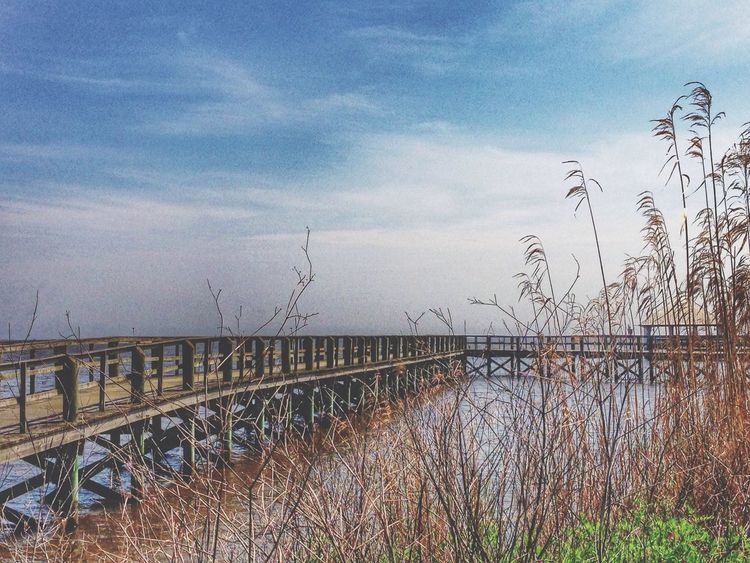 Near And Far The Path Less Traveled By Pointer Footwear Nature EyeEm Best Shots Appalachicola Florida My Best Photo 2014 Landscape Florida Tranquility Tranquil Scene Waterfront Travel Beauty In Nature Lake Waterfront Park Walkway Bridge Tall Grass Cloud - Sky Scenics