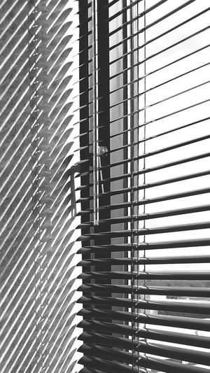 Pattern Indoors  Blinds Full Frame Backgrounds Window No People Day Repetition Low Angle View Architecture Built Structure Close-up Black And White Window Dressing Window Designs Window View Design Lines View From Inside Interior Design Shapes Inside Looking Out Light And Shadow Mini Blinds