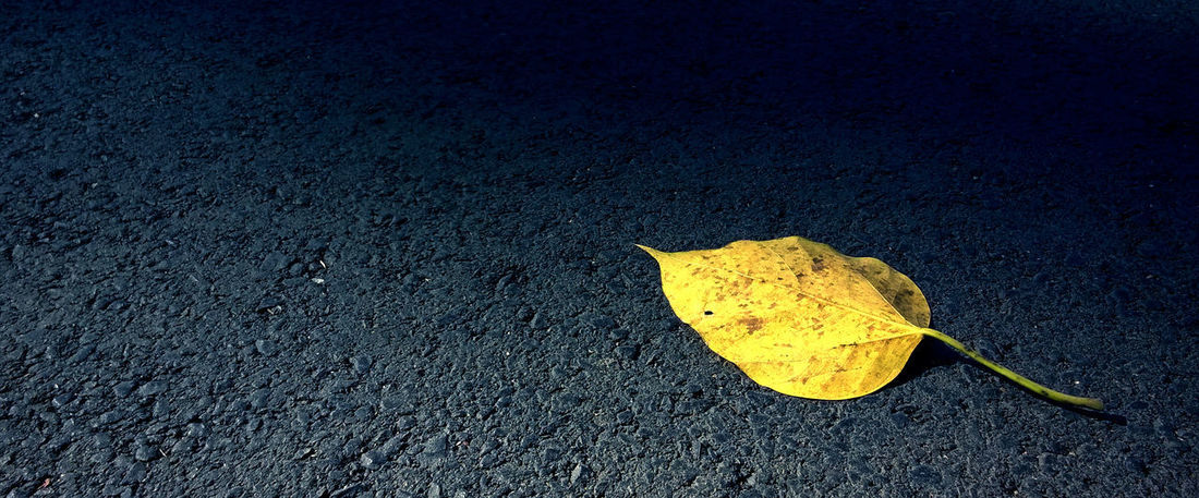 Yellow in the dark Facebook Cover Covering Yellow Leaf Autumn Nature Blackandwhite Simple Photography