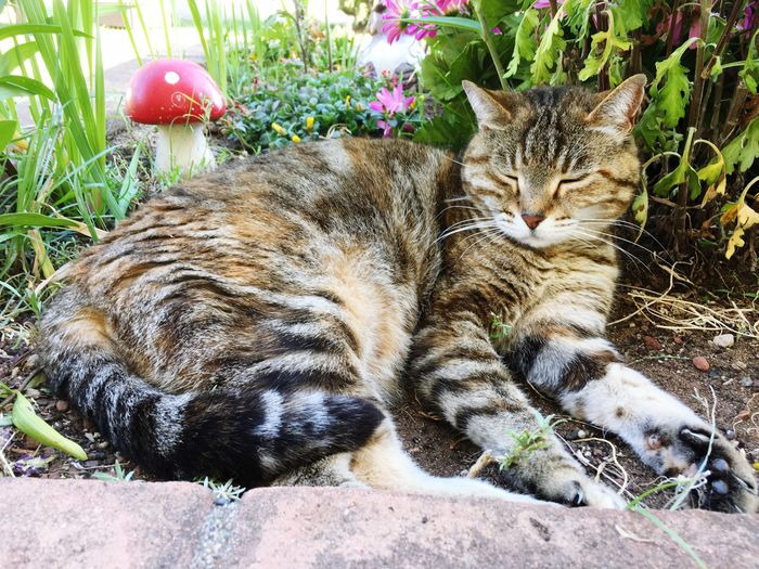Feline Animal Mammal Cat Day Animal Themes Vertebrate Relaxation Nature Domestic Animals Domestic Pets Domestic Cat One Animal Lying Down Resting High Angle View