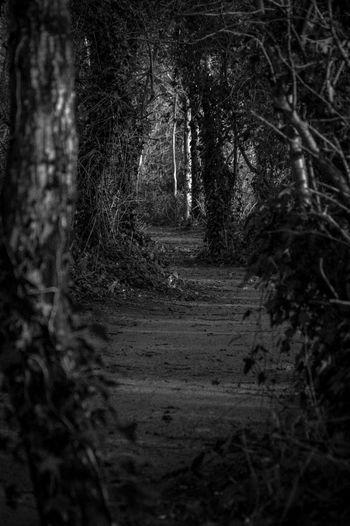 Victoria Park, Belfast. Grey Day Landscape Blackandwhite Photography Pentax K-3 Belfast County Antrim Northern Ireland Forest Path Forestwalk