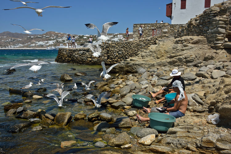 two fishermen sitting on a pebble beach flaking some fishes surrounded by seagulls who want to steel the fishes. Animal Themes Sea Animal Wildlife Real People Flying Flock Of Birds Seagull Fisherman Group Of Animals Animals In The Wild Bird Eating Workers Outdoors Landscape Mykonos,Greece Shoreline Man At Work Sitting Flaking Fishes Flaking Rock - Object Beach Nature Water Animal Motion Day