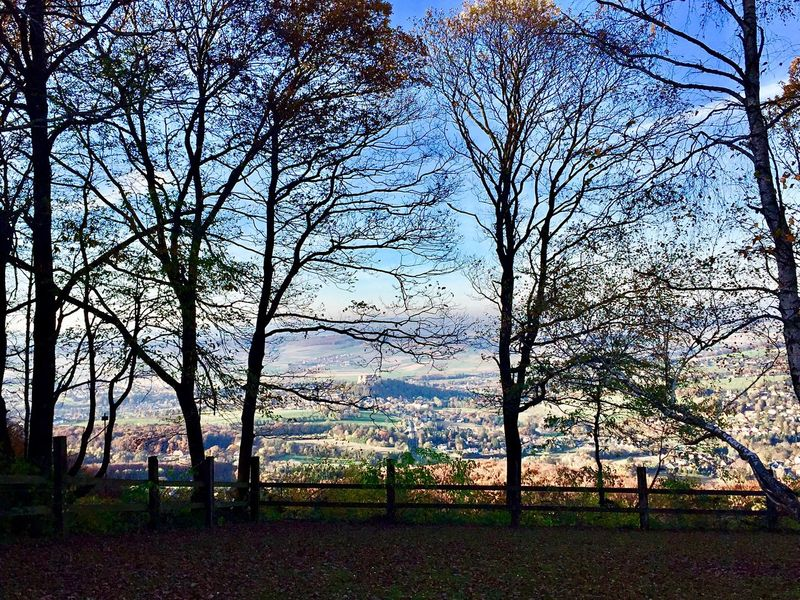 Ausblick vom Kohlreithberg 🙌 Wienerwald  Colors Of Nature Agriculture Rural Scene Forest View Autumn Branches And Sky Branches Trees And Nature Trees And Sky Trees Nature Outdoors Beauty In Nature Tranquility Bare Tree Scenics Landscape Tranquil Scene Sky Day