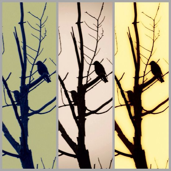 Silhouette Bird Watching Birds_collection Animal Themes Playing With Filters Playing With Edits Nature Nature_collection From My Point Of View