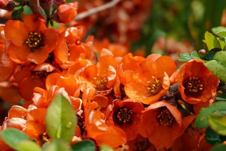 Close-up of orange berries on plant