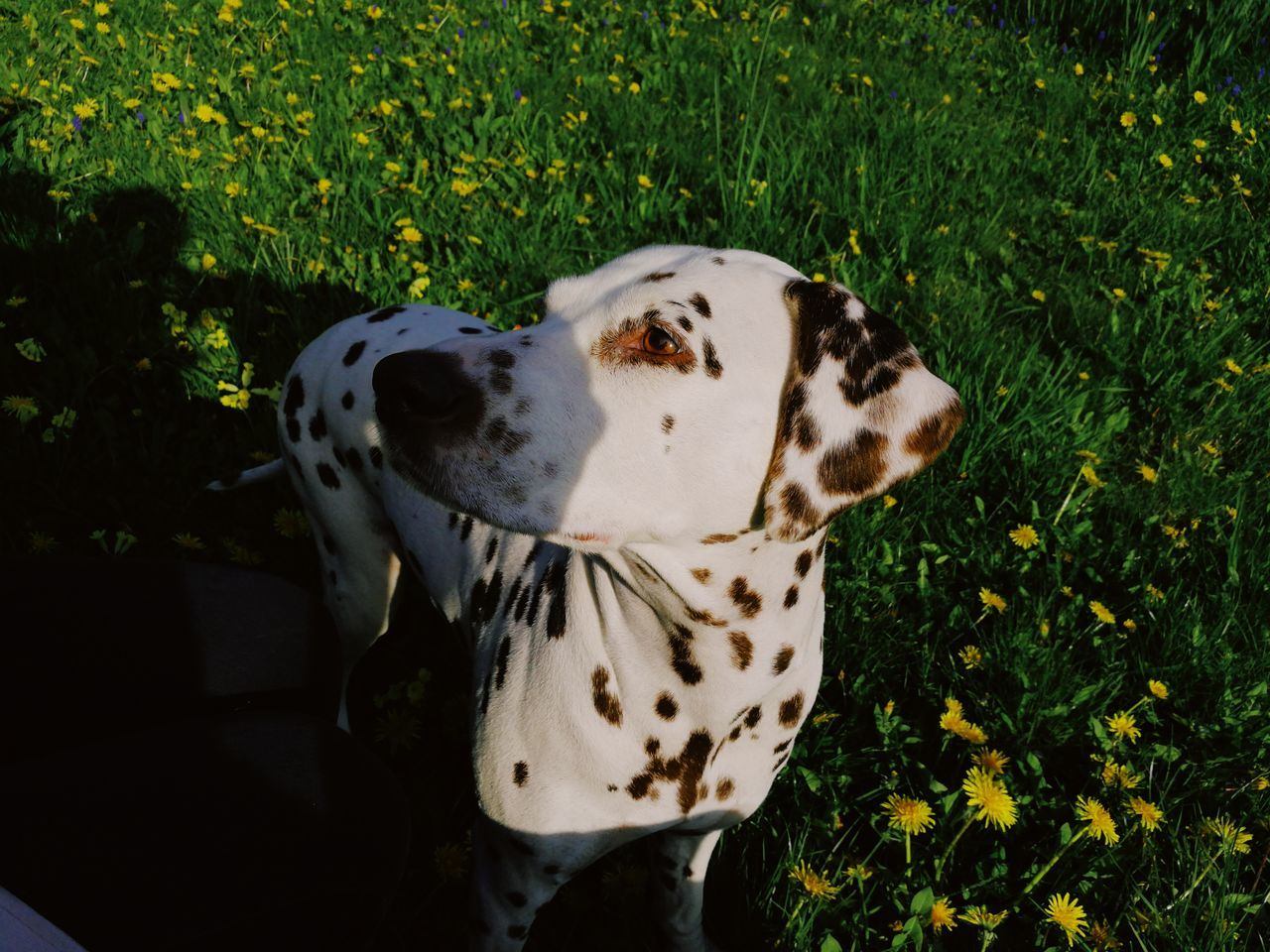 Close-Up Of Dog Standing Amidst Plants On Field