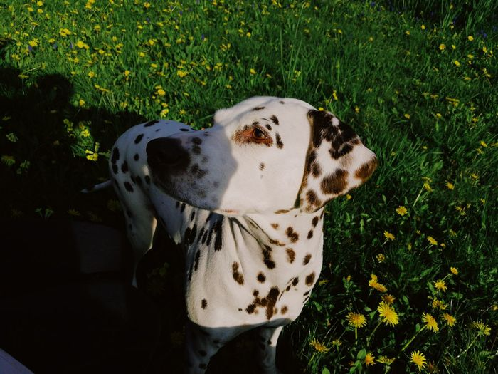 When the dog want some food... VSCO Vscogrid No People Nature Close-up Sky Day Dogs Dog Love Dalmatian Springtime Spring