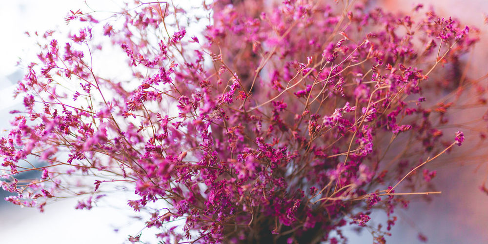 Close-up of pink flowering tree