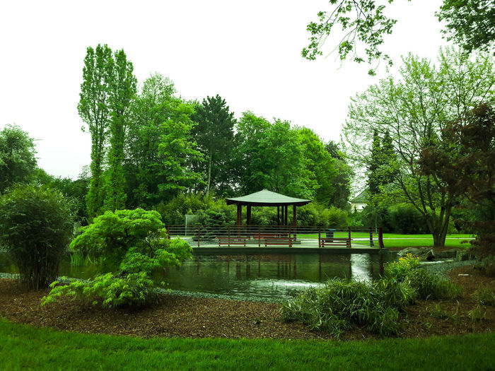 Trees in park against sky during rainy season