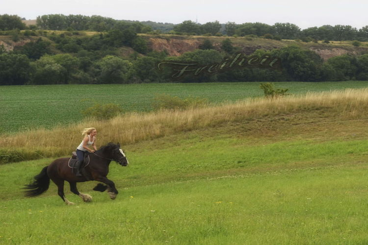 Freedom Power Kraft Anouk Salt Rook Shire Horses Freedom Grass Domestic Animals Horse Animal One Person Activity Outdoors Shire Horses Shire Shirehorse
