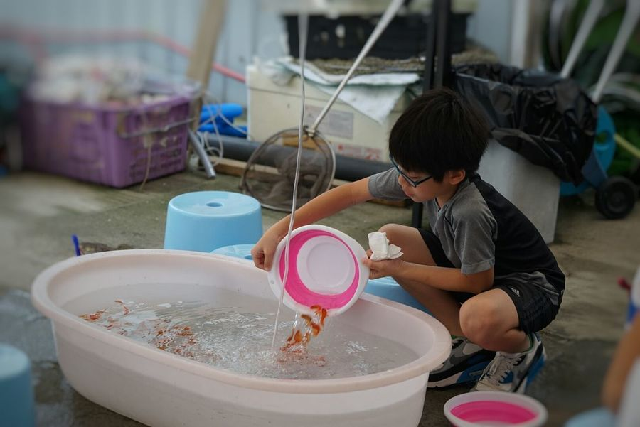 Goldfish Scooping Hong Kong Yuen Long