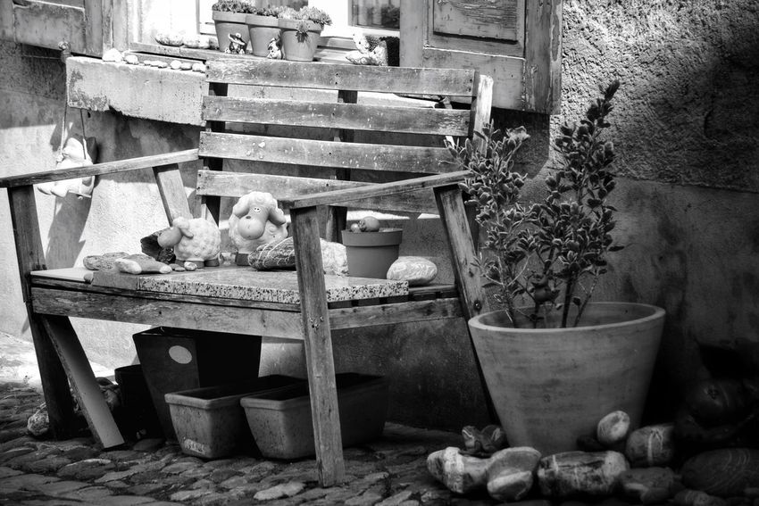 Potted Plant No People Outdoors Growth Old Buildings Monochrome Photograhy Your Ticket To Europe Taking Photos The Week On EyeEm Black & White Photography Monochrome _ Collection Bench Benches_Of_The_World_Unite Bench Black And White Streetphotography Streetphotography_bw Black & White Lonely Alone Monochrome Photography My Point Of View Sitting Architecture First Eyeem Photo Architectural Detail