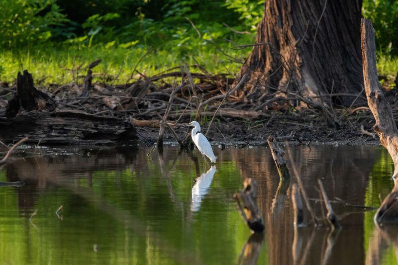 Birds perching on tree trunk in lake