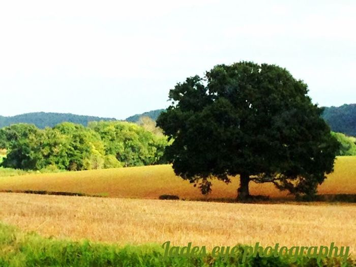 Landscape Agriculture Field Nature Farm Tree Beauty In Nature Rural Scene Growth Grass Tranquility Scenics Summer No People Day Outdoors Sky