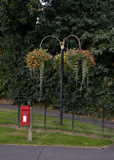 Hillsborough village in bloom Northern Ireland Path Quaint  Flash Of Red Flower Growth Hanging Basket Hanging Basket Of Flowers Nature No People Outdoors Postbox Quaint Village Red Trailing Plant Tree